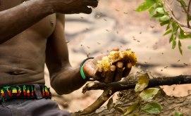 Vaxkakorna lämnas kvar som mat till fågeln. Bild: Claire Spottiswoode.