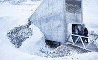 Nya fröer rullas bara in i frövalvet några enstaka gånger per år. Inför varje inlagring måste landet skicka listor på sina fröer. Då kan personal på Svalbards globala frövalv kontrollera att det inte skickas några dubbletter. Bara unika fröer får lagras in. Bild: Erik Abel.