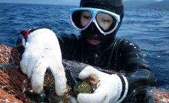 De japanska Ama-dykarna kan vara under vattnet halva arbetsdagen. Här lägger dykaren Yoko-san musslor i en korg mellan de upprepade dyken. Bild: Erika Schagatay.